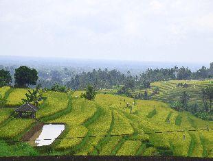 riceterraces of jatirui2